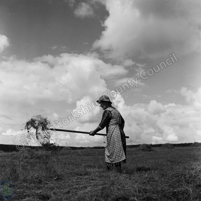 Haymaking, Summerbridge